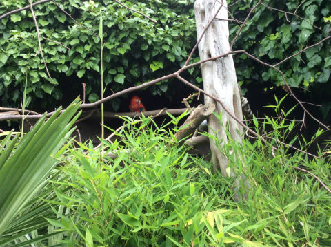 parrot web