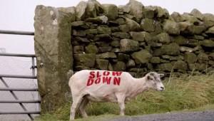 Think-sheep